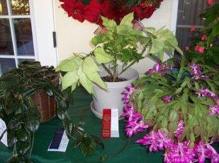 2010 HRGC Flower Show 008