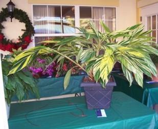 2010 HRGC Flower Show 010