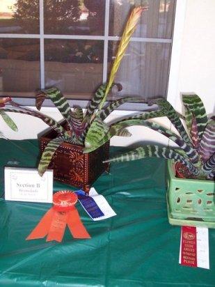 2010 HRGC Flower Show 011