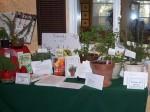 2010 HRGC Flower Show 029a
