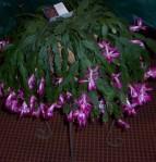 2010 HRGC Flower Show #2 012a