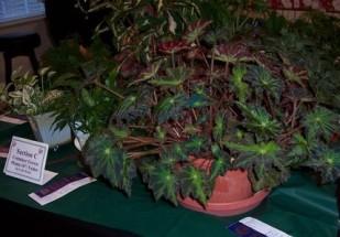 2010 HRGC Flower Show #2 016