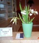 2010 HRGC Flower Show #2 018
