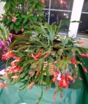 2010 HRGC Flower Show #2 051