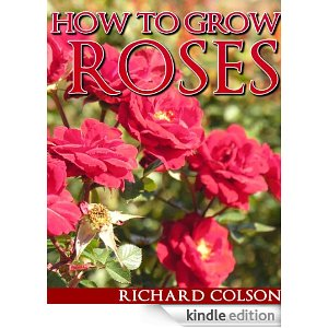 Identify the right roses, make sure they receive at least 6 hours of sun every day and make sure that the roses are watered on regularly. If you follow those steps and more detailed steps in this report, you will be the proud owner of healthy roses.