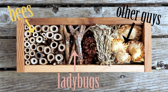 How-to-make-a-Bug-Hotel-and-who-will-live-there